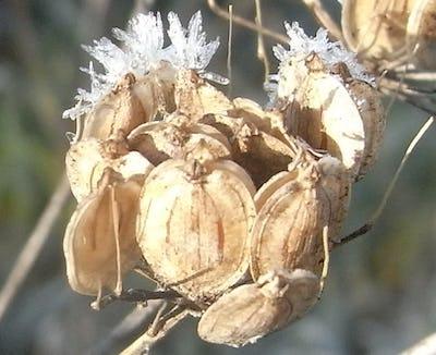 Vive le glandage! Fruits et graines en automne.
