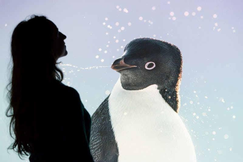 Antarctica  Museum of Natural Sciences