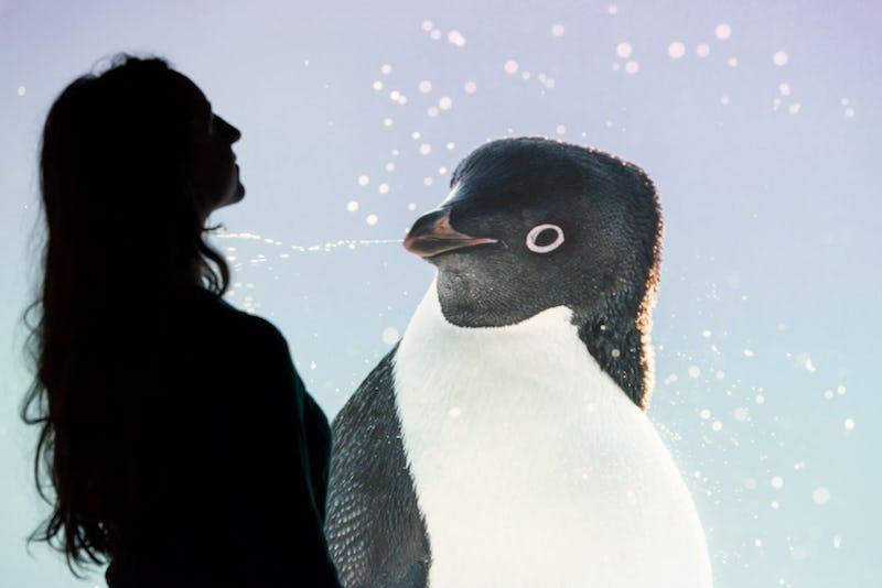Antarctica  Muséum des Sciences naturelles