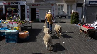 Schapen festival des moutons
