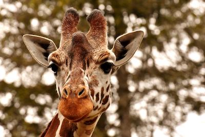 Speelweek: De dierentuin
