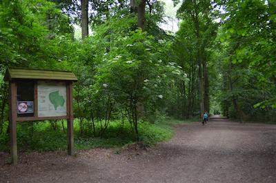 Het Laarbeekbos in met Brukselbinnenstebuiten