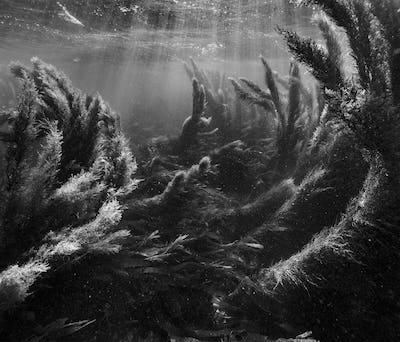 "Exposition ""Invisible, Seascapes"" Nicolas Floc'h"