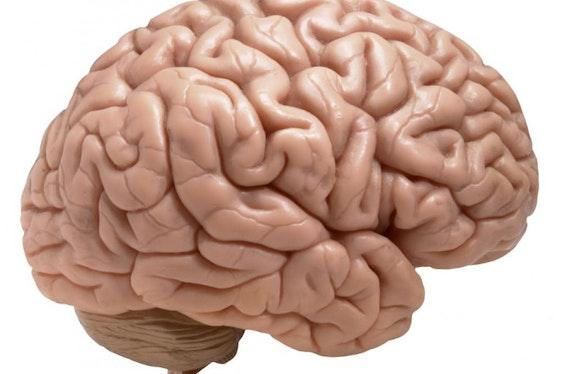 Broodje Brussel - Hersenen en ontstressen