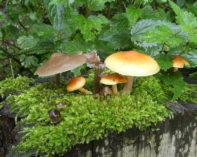 De paddenstoelen van het Scheutbos