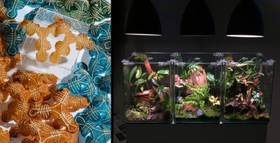Design by Decay, Decay by Design / Andrea Ling (CA) & EDEN  Ethique  Durable  Ecologie  Nature / Olga Kisseleva (RU)