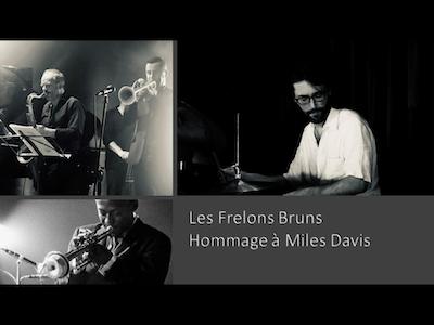 Les Frelons Bruns